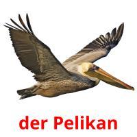 der Pelikan picture flashcards