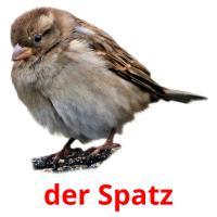der Spatz picture flashcards