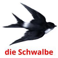 die Schwalbe picture flashcards