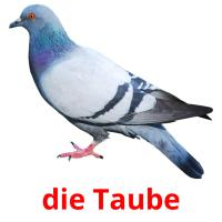 die Taube picture flashcards