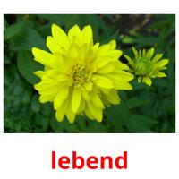 lebend picture flashcards