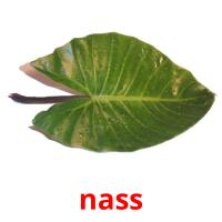 nass picture flashcards
