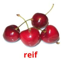 reif picture flashcards