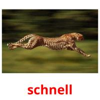 schnell picture flashcards