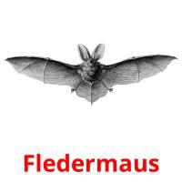 Fledermaus picture flashcards