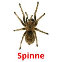 Spinne picture flashcards