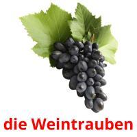 die Weintrauben picture flashcards