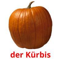 der Kürbis picture flashcards