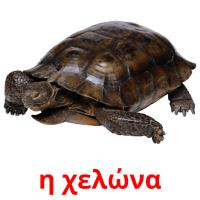 η χελώνα picture flashcards