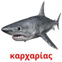 καρχαρίας picture flashcards