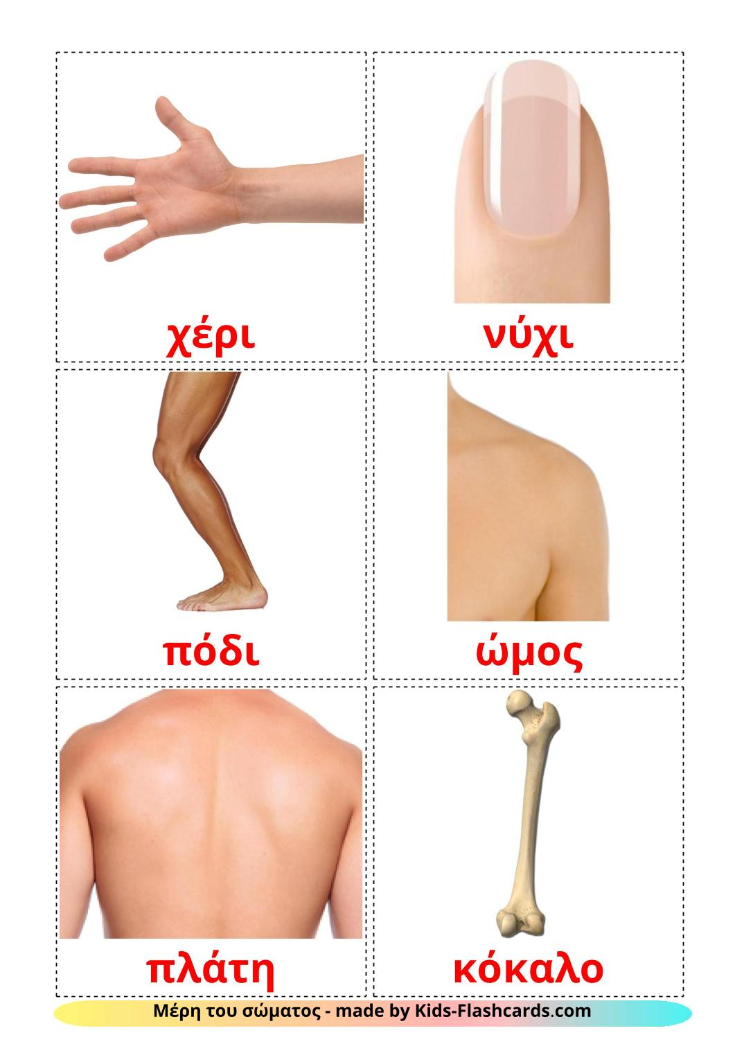 Body Parts - 26 Free Printable greek Flashcards