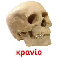 κρανίο picture flashcards