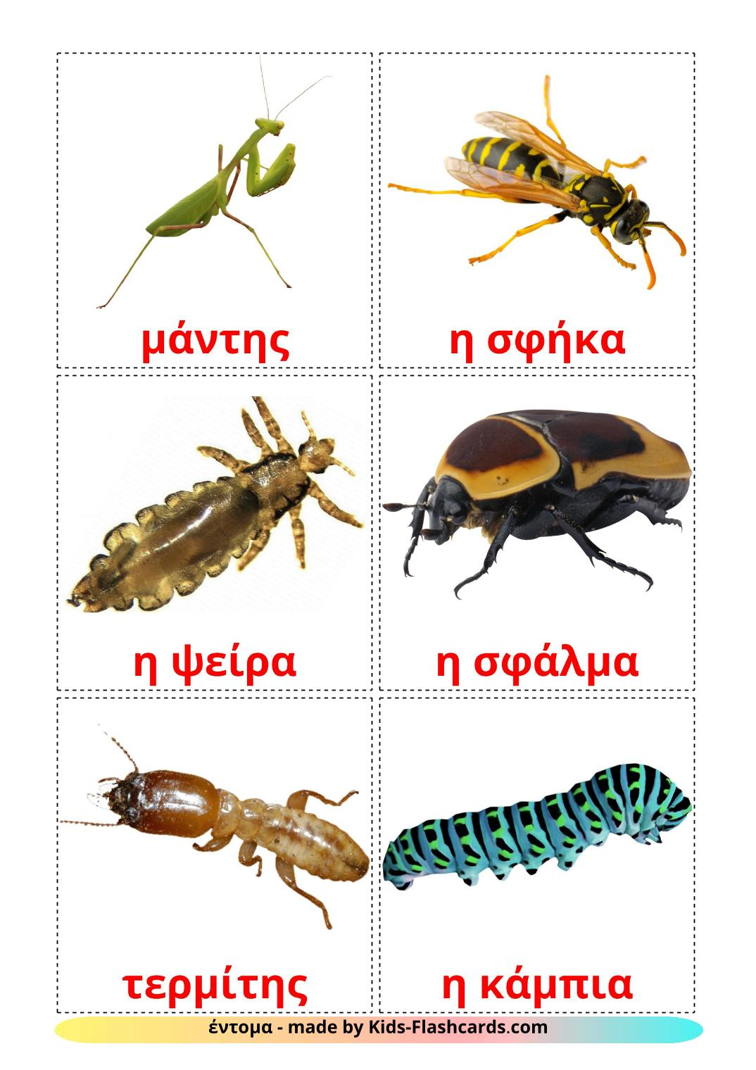Insects - 23 Free Printable greek Flashcards