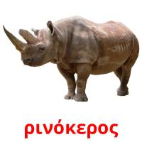 ρινόκερος picture flashcards