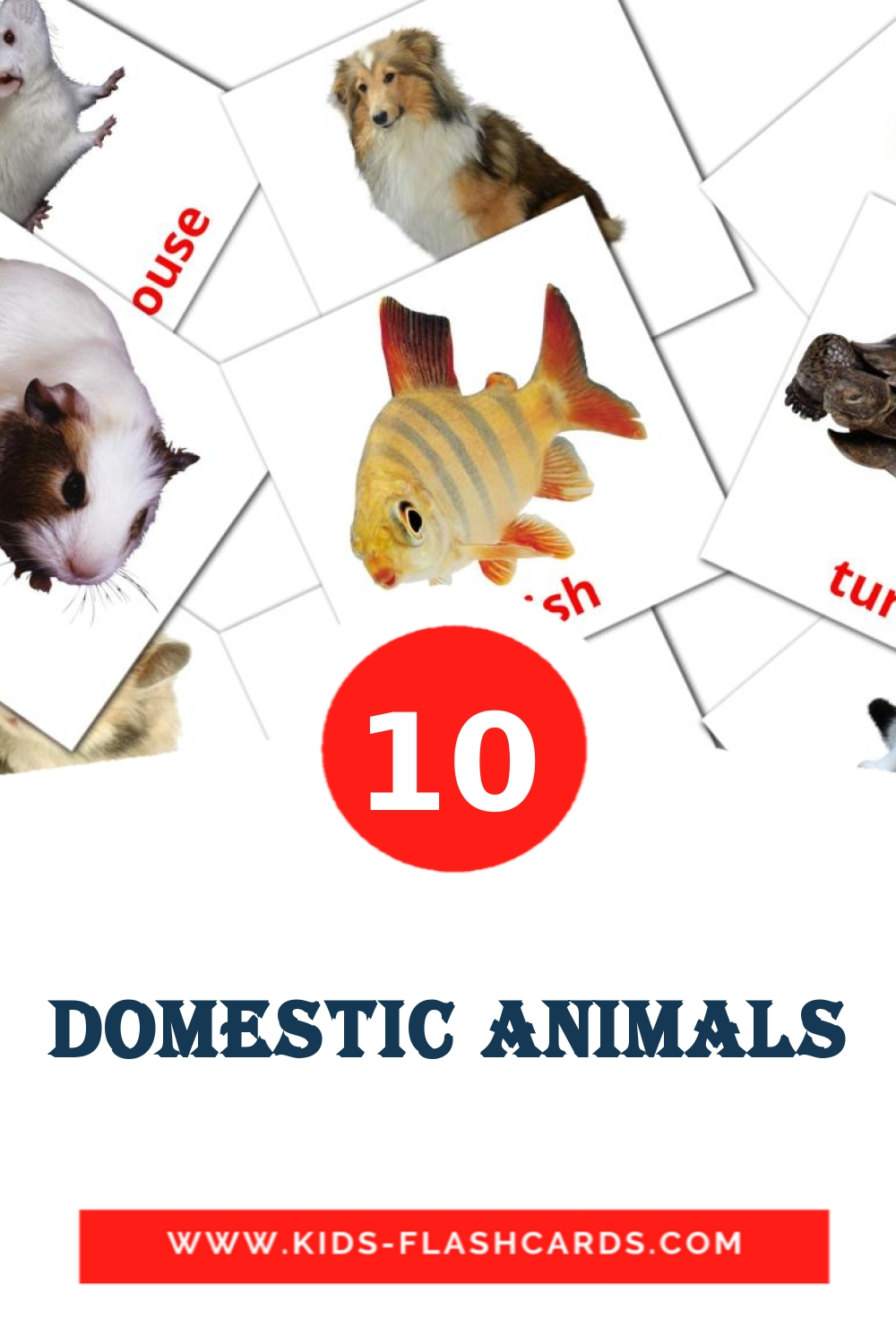 10 Domestic animals Picture Cards for Kindergarden in english