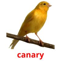 canary picture flashcards