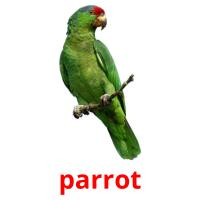 parrot picture flashcards