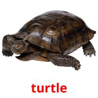 turtle picture flashcards