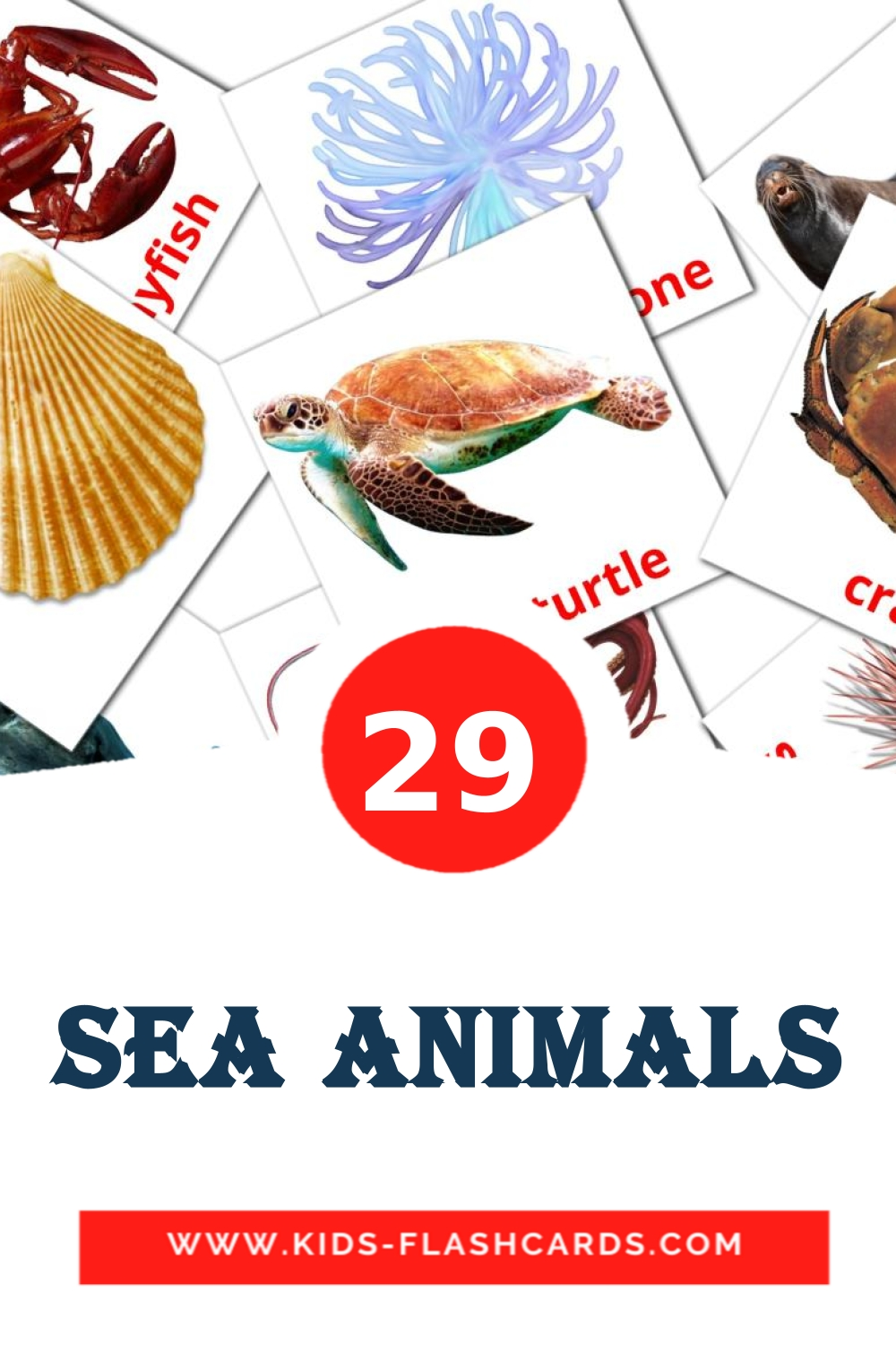 29 Sea animals Picture Cards for Kindergarden in english