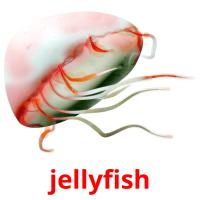 jellyfish picture flashcards