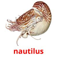 nautilus picture flashcards