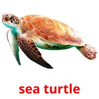 sea turtle picture flashcards