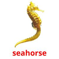 seahorse picture flashcards