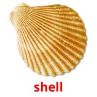 shell picture flashcards