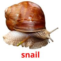 snail picture flashcards
