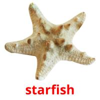 starfish picture flashcards