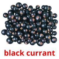 black currant picture flashcards