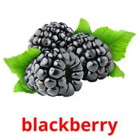 blackberry picture flashcards