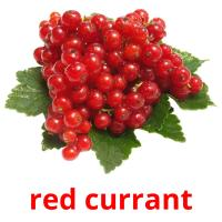 red currant picture flashcards