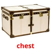 chest picture flashcards