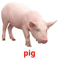 pig picture flashcards