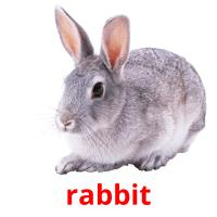 rabbit picture flashcards