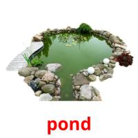 pond picture flashcards