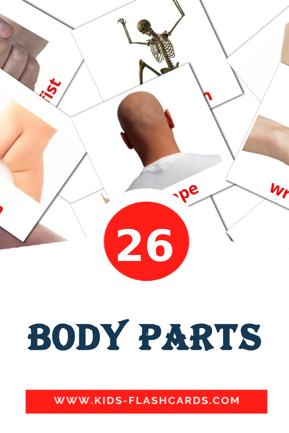 26 Body Parts Picture Cards for Kindergarden in english