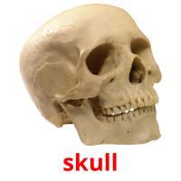 skull карточки энциклопедических знаний