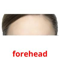 forehead picture flashcards