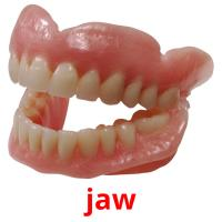 jaw picture flashcards