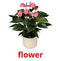 flower picture flashcards