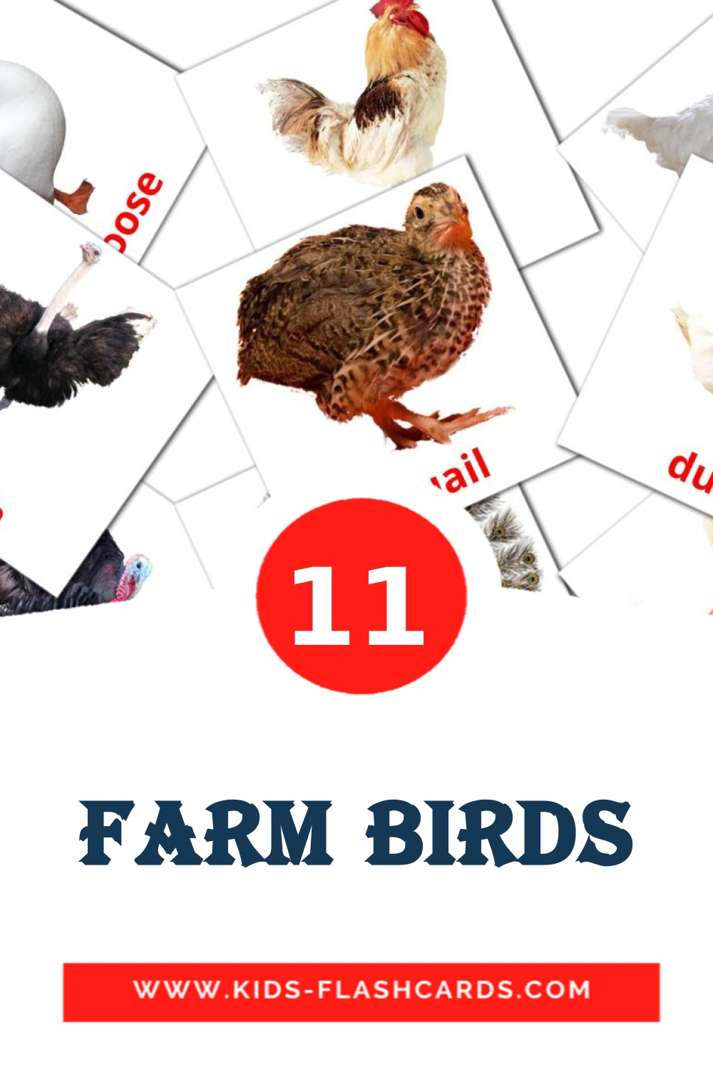 11 Farm birds Picture Cards for Kindergarden in english