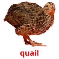 quail picture flashcards