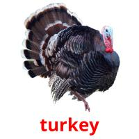 turkey picture flashcards