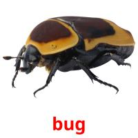 bug picture flashcards