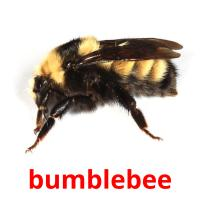 bumblebee picture flashcards