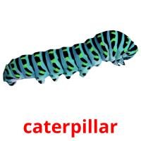 caterpillar picture flashcards