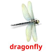 dragonfly picture flashcards