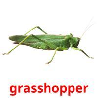 grasshopper picture flashcards